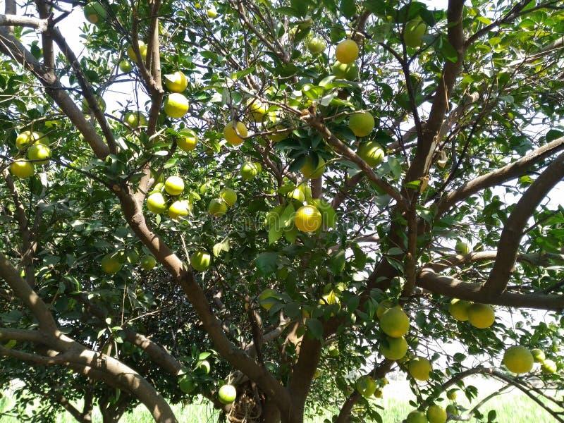 fruit royalty-vrije stock afbeelding