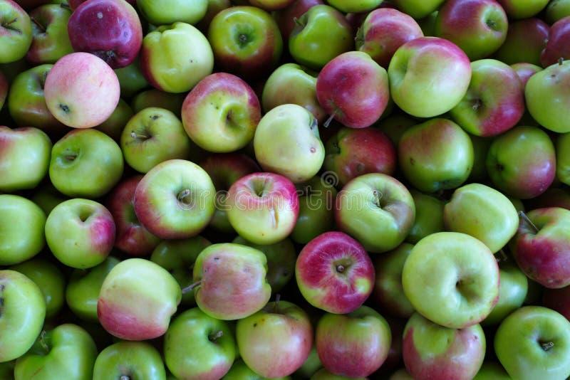 fruit aigre rouge-repéré de pomme photos stock