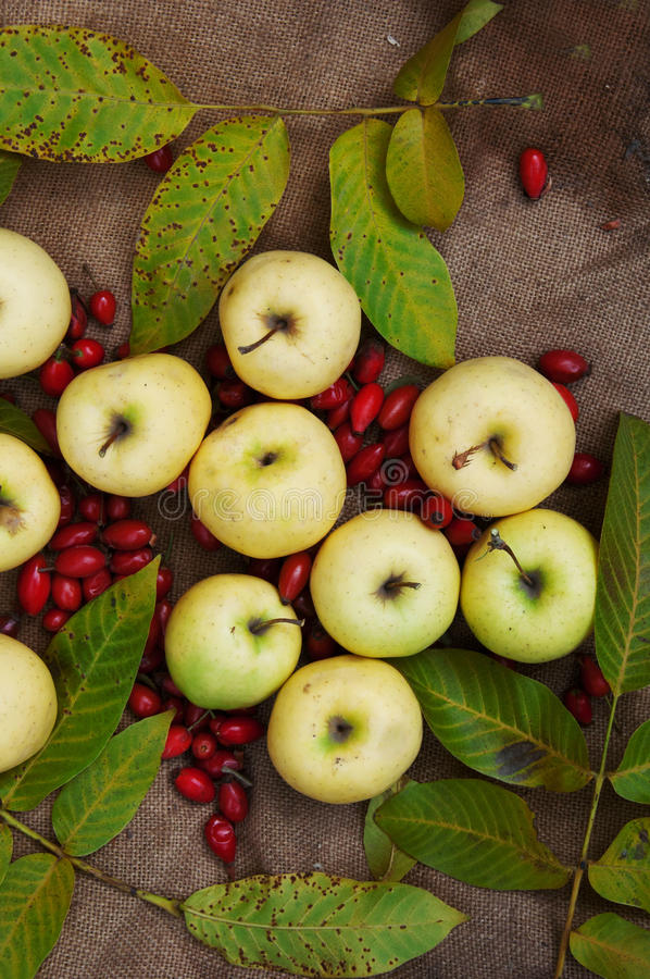 Fruit, apples, autumn food, yellow fruits, sweet yellow apples, autumn harvest, leaves, view from above, green apples in autumn le royalty free stock image