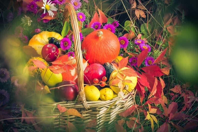 Fruit basket Autumn garden. Fruit in a basket. Autumn in the garden royalty free stock photography