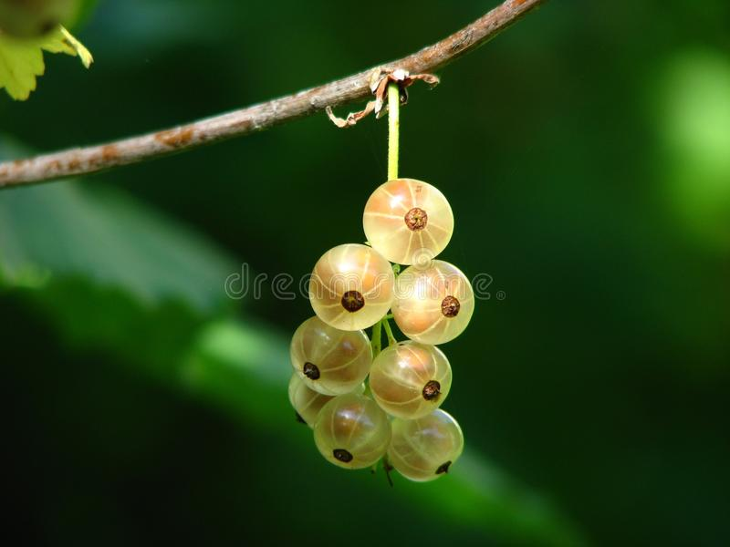 Fruit, Berry, Close Up, Macro Photography royalty free stock photography