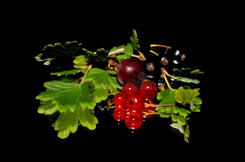 Fruit, Berry, Natural Foods, Currant royalty free stock images