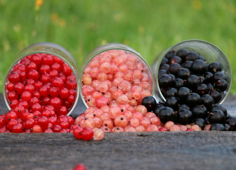 Fruit, Bes, Opbrengst, Frutti Di Bosco
