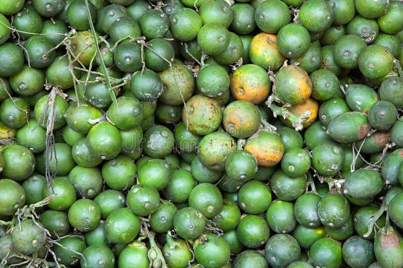 Fruit of the betel palm. Fruit of the betel palm for healthy food royalty free stock images