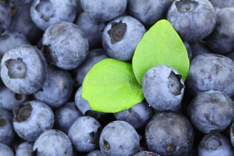 Fruit, Blueberry, Food, Produce royalty free stock photography