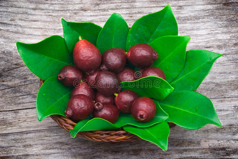 Fruit of Cattley guava or Peruvian guava (Psidium littorale susp. longipes). royalty free stock photo