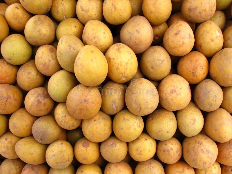 Fruit-Chikoo ou sapotille tropical images libres de droits