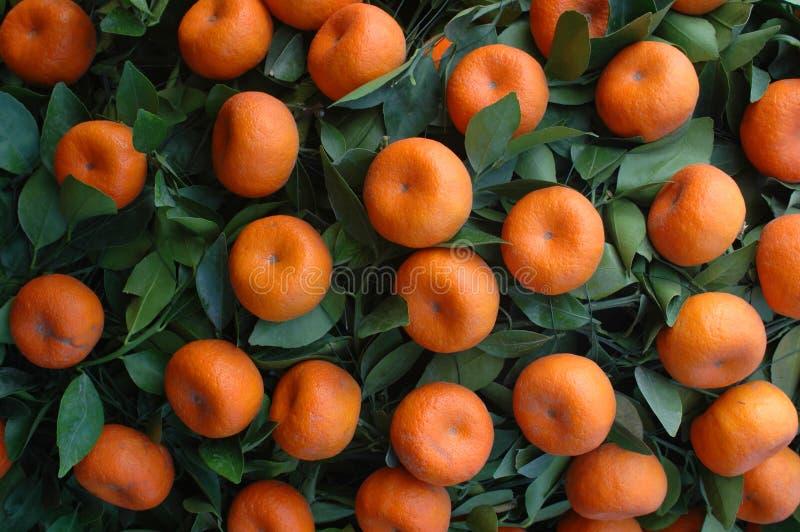 Fruit chinois d'an neuf - mandarines images libres de droits