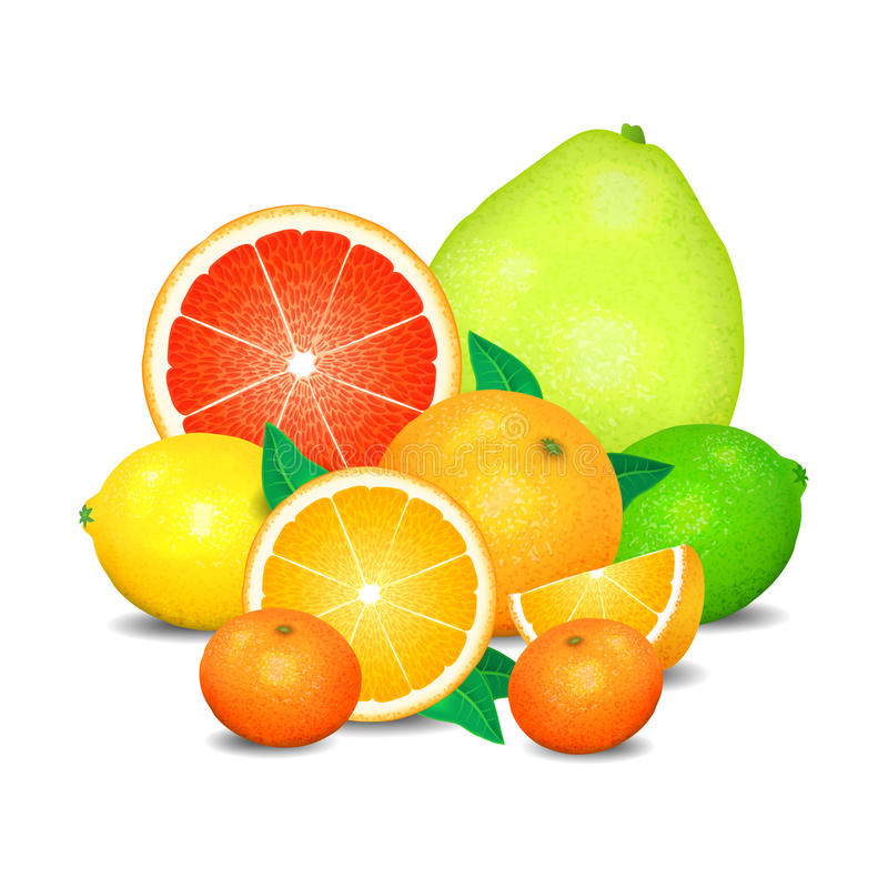 Fruit of citrus, set of citrus fruit. Citrus fruits. (orange, lemon, lime, grapefruit, pomelo, mandarin). Realistic vector illustration on white background stock illustration