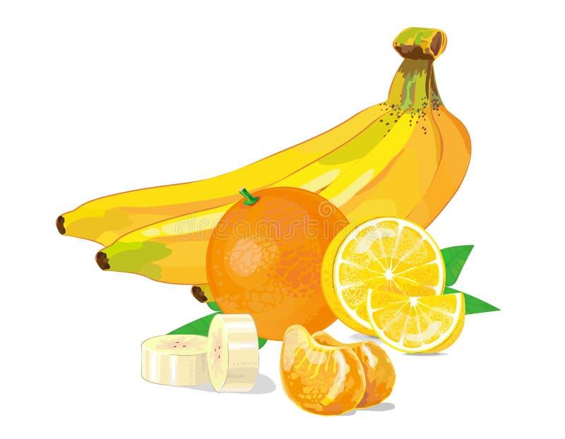 Fruit collection, banana orange lemon. vector illustration royalty free stock photography