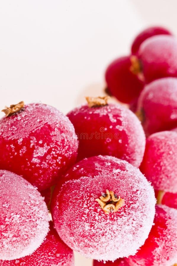 Fruit congelé en glace photos stock