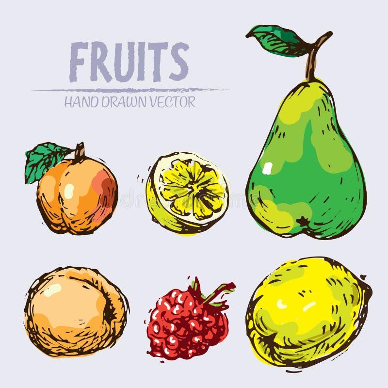Fruit détaillé de vecteur de Digital tiré par la main illustration stock