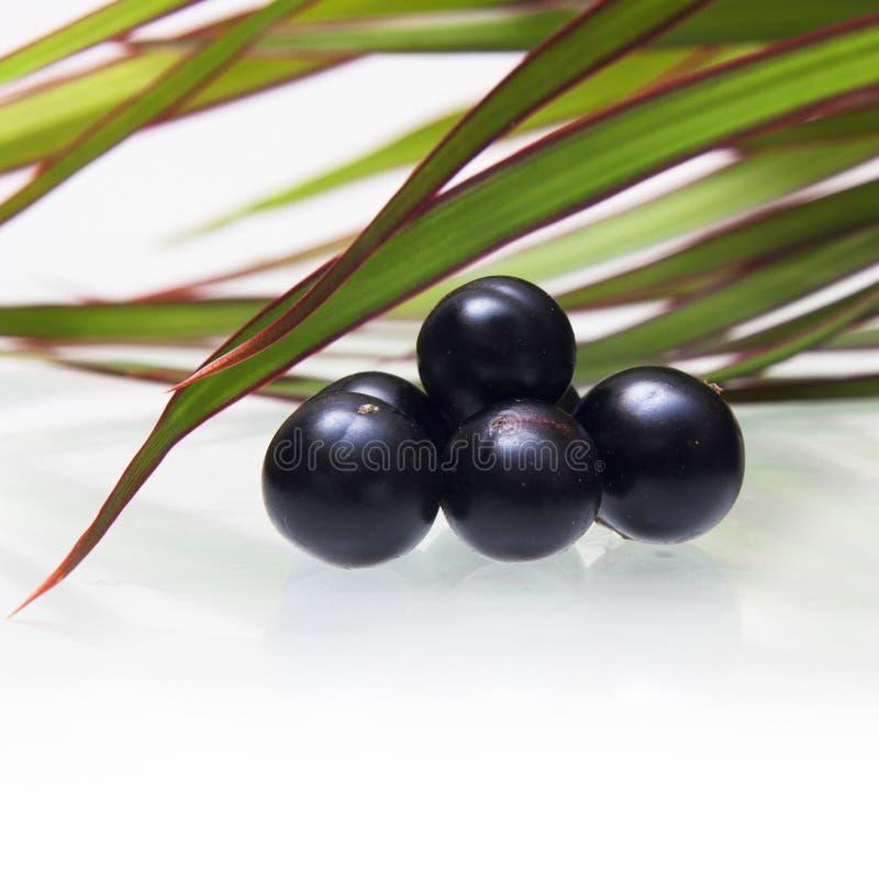 Fruit d'acai d'Amazone photo libre de droits