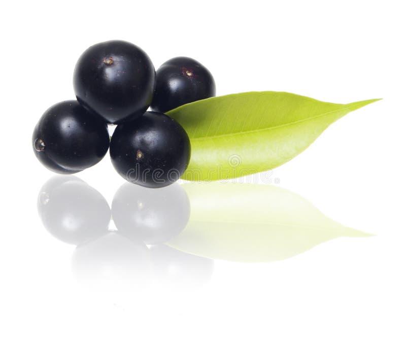 Fruit d'acai d'Amazone images stock