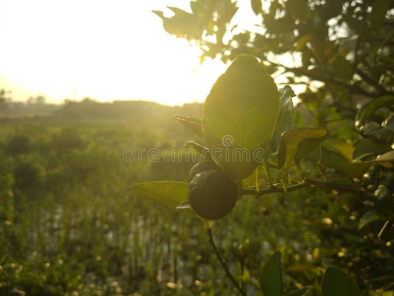 Fruit dans le matin image libre de droits