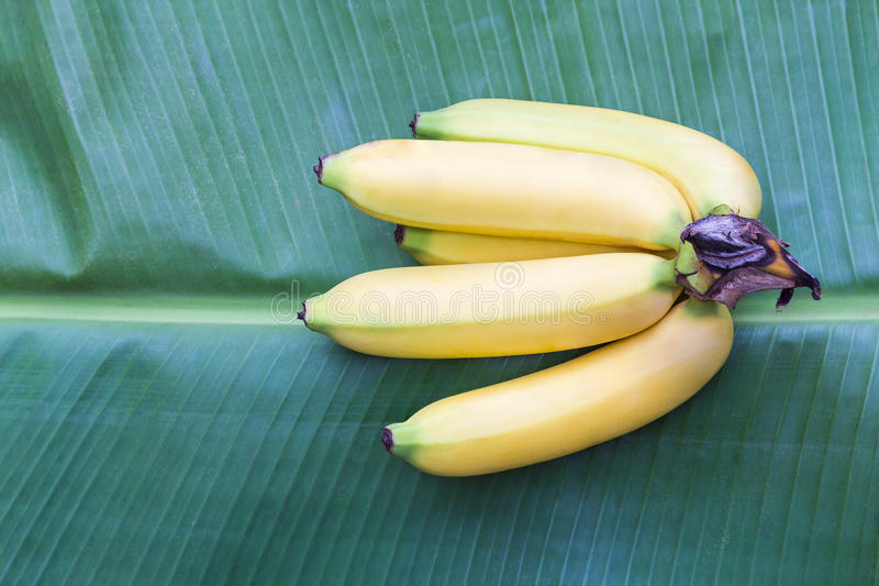 Fruit de banane de Cavendish images stock