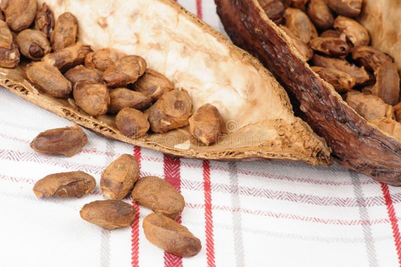 Fruit de cacao images stock