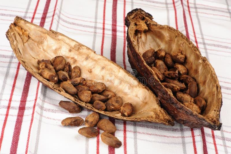 Fruit de cacao image libre de droits