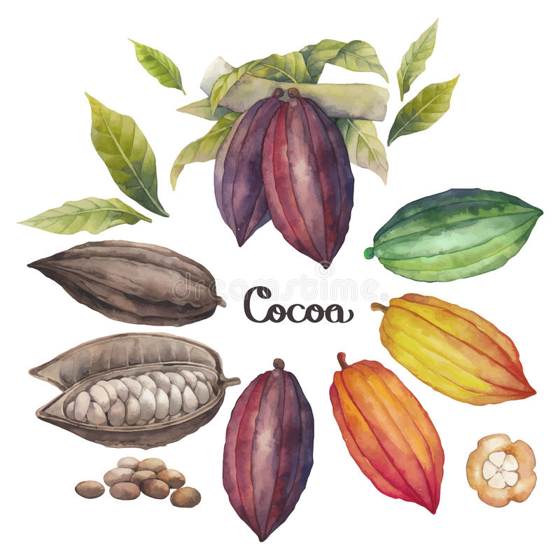 Fruit de cacao d'aquarelle illustration de vecteur