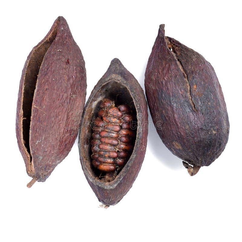 Fruit de cacao, haricots crus de cacao, cosse de cacao d'isolement sur le backgr blanc photo libre de droits