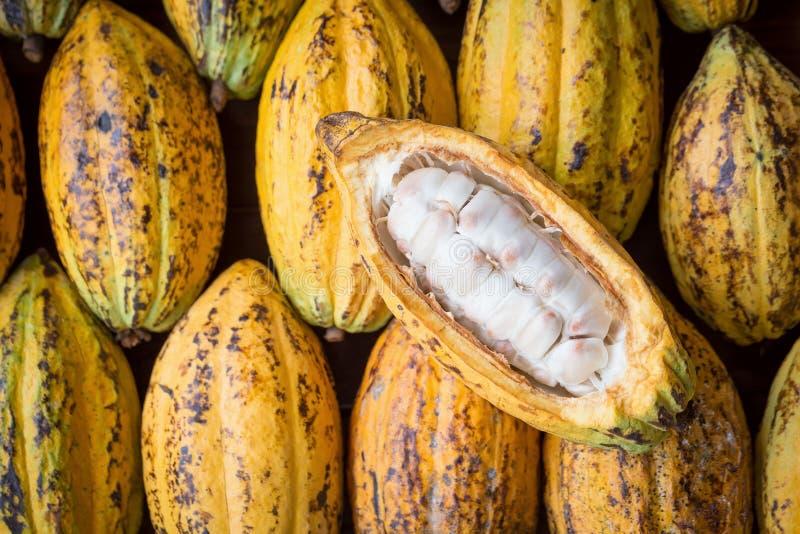 Fruit de cacao, haricots crus de cacao, fond de cosse de cacao images libres de droits