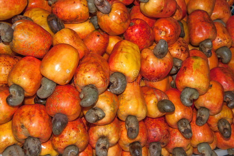 Fruit de Caju - anarcadier images stock