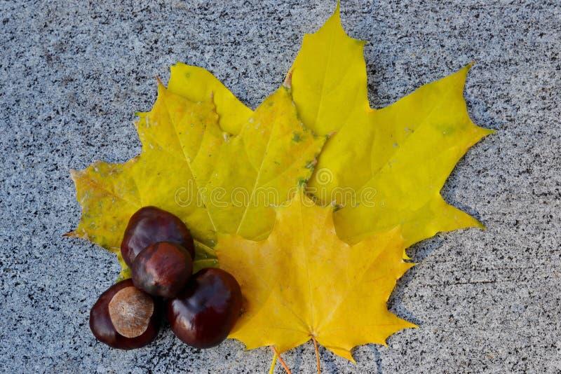 Fruit de châtaigne et feuilles d'automne jaunes sur le parapet de trottoir images libres de droits