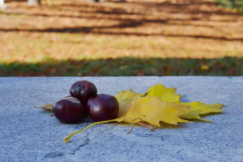 Fruit de châtaigne et feuilles d'automne jaunes sur le parapet de trottoir photo libre de droits