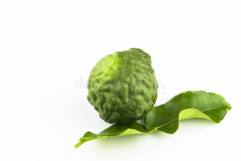 Fruit de chaux ou de bergamote de Kaffir image libre de droits