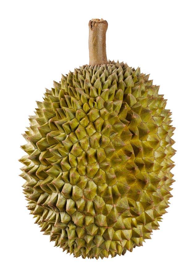 Fruit de durian d'isolement sur le blanc image libre de droits