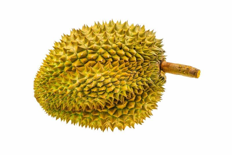 Fruit de durian d'isolement sur le fond blanc, fruit frais du verger, roi de fruit de Thaïlande images libres de droits