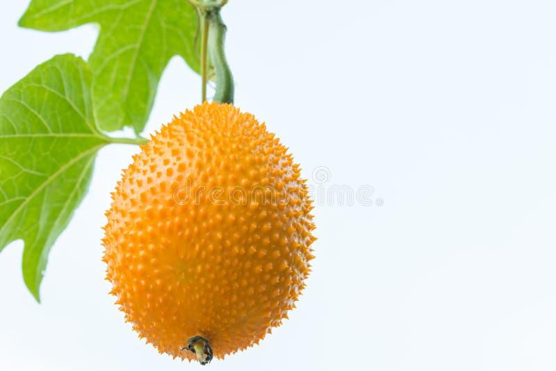 Fruit de Gac, jacquier de chéri photo stock