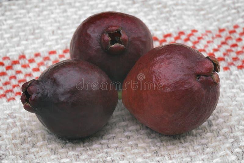 Fruit de goyave de Cattley ou de goyave péruvienne (susp de littorale de Psidium image libre de droits