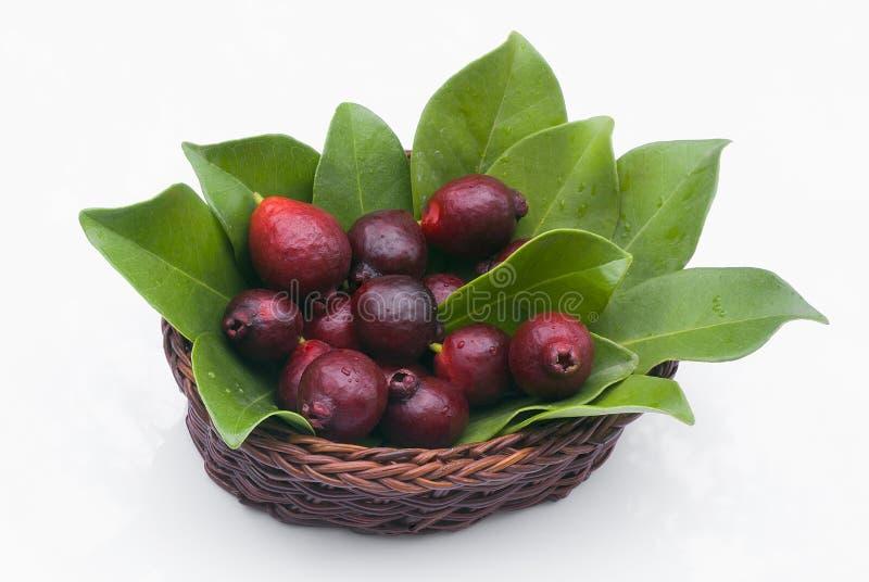 Fruit de goyave de Cattley ou de goyave péruvienne (susp de littorale de Psidium photographie stock