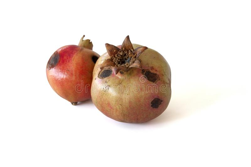 Fruit de grenade avec les taches putréfiées photographie stock libre de droits