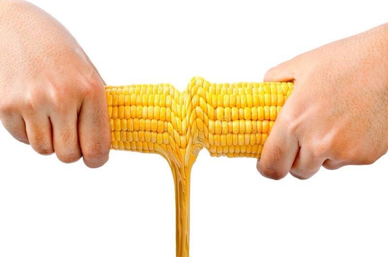 Fruit de maïs et pétrole frais photo stock