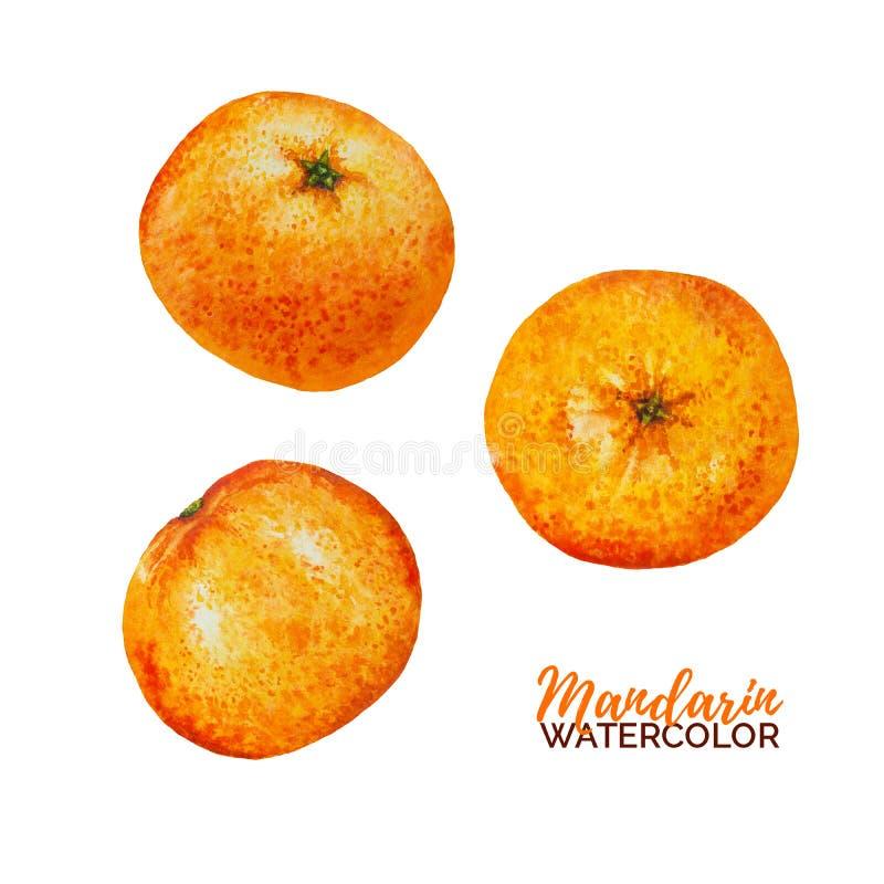 Fruit de mandarine d'aquarelle images stock