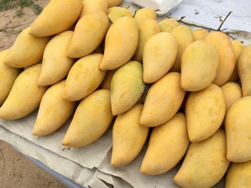 Fruit de mangue photographie stock libre de droits