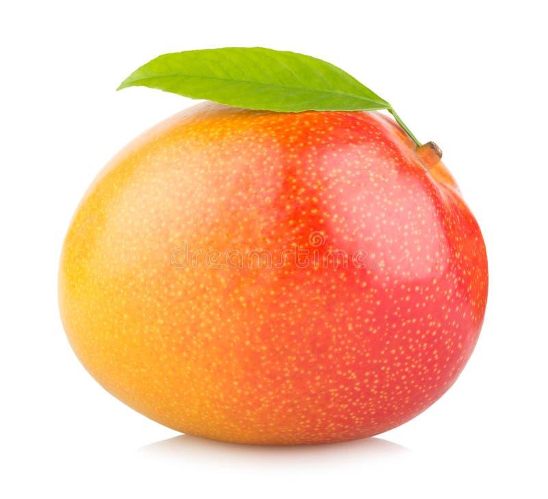 Fruit de mangue images stock