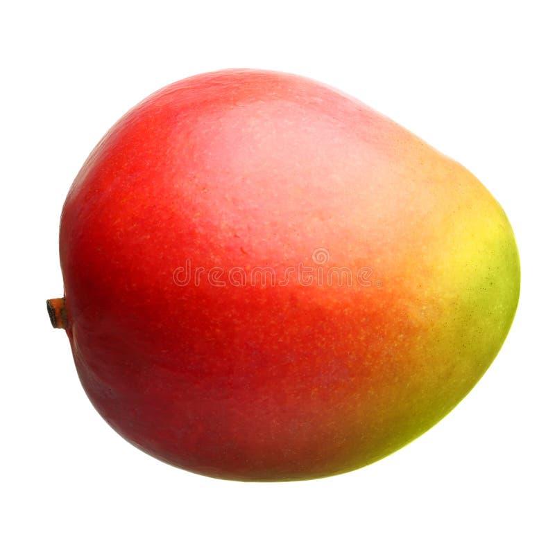 Fruit de mangue d'isolement image libre de droits