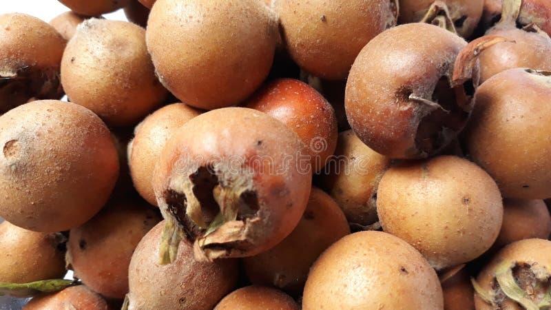 Fruit de nèfle image stock