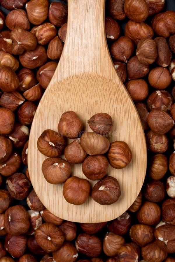 Fruit de noisette images stock