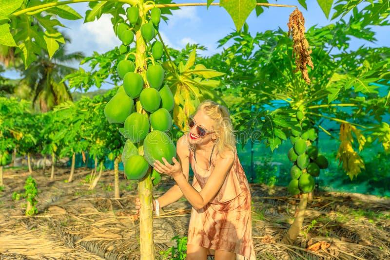 Fruit de noix de coco de touchs d'agriculteur photos libres de droits