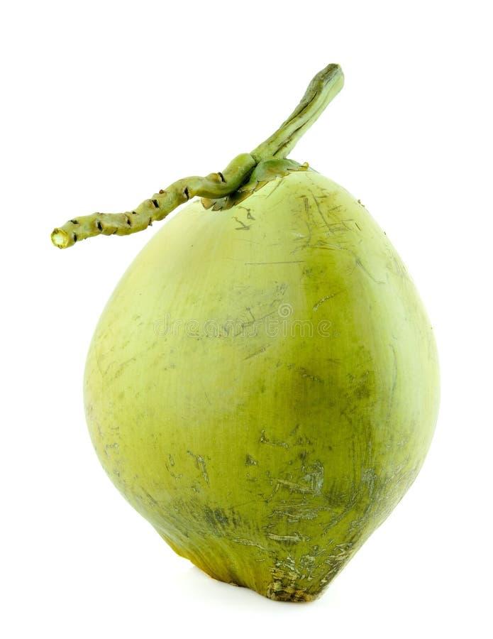 Fruit de noix de coco image libre de droits