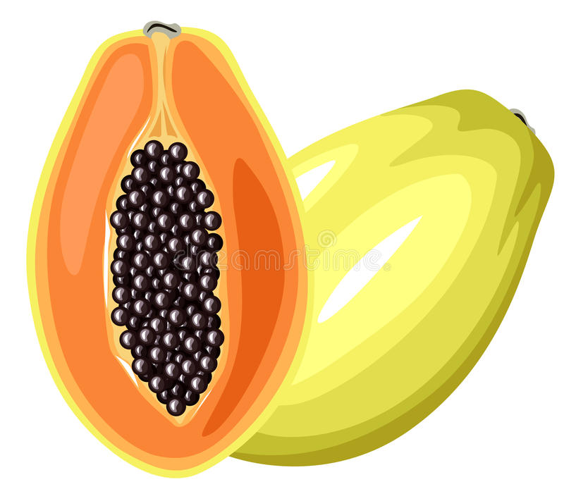 Fruit de papaye illustration stock
