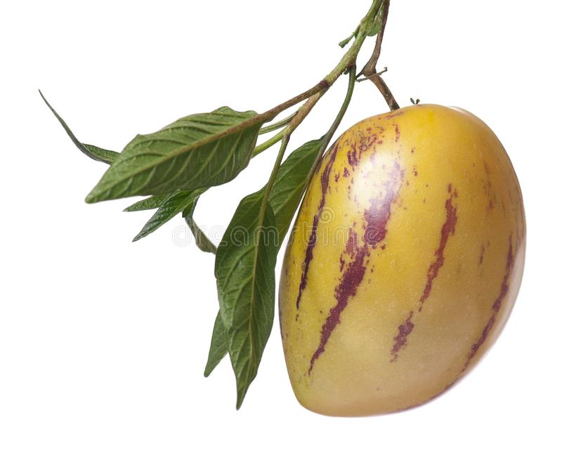 Fruit de Pepino photographie stock libre de droits