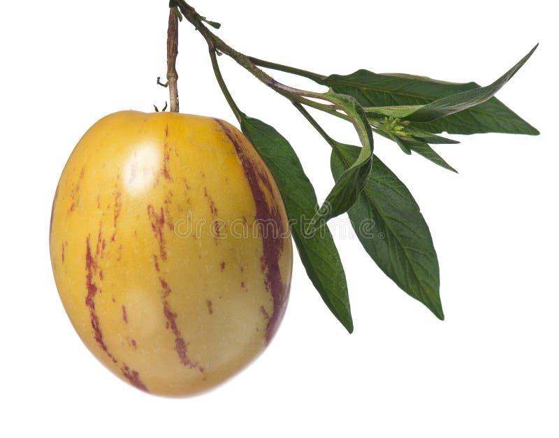 Fruit de Pepino images stock