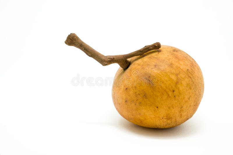 Download Fruit De Santol D'isolement Sur Le Fond Blanc Photo stock - Image du fond, blanc: 56491104