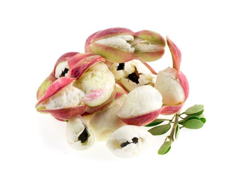 Fruit de tamarinier de Manille d'isolement sur le fond blanc image stock