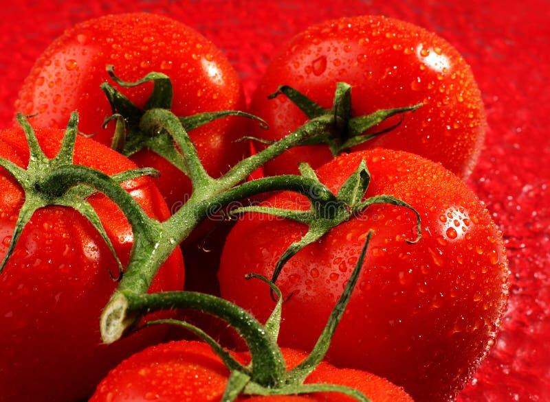 Fruit de tomate photographie stock libre de droits